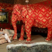Is there an elephant in your room?