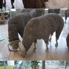 Sheep