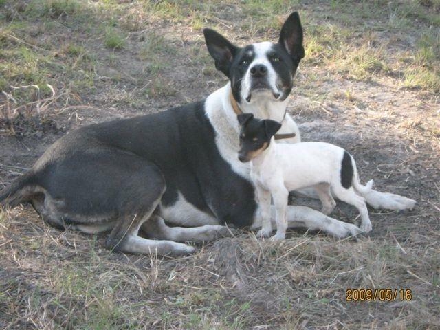 Big Dog, Small Dog