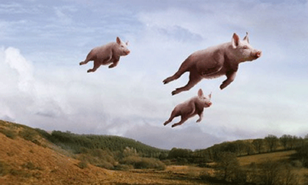 pigs-can-fly.png