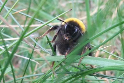 bee lifting leg