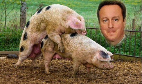 Cameron and pigs