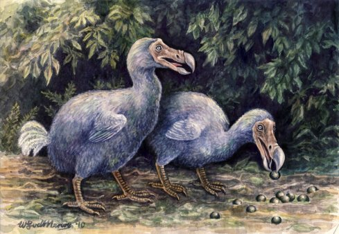 dodos_by_willemsvdmerwe-