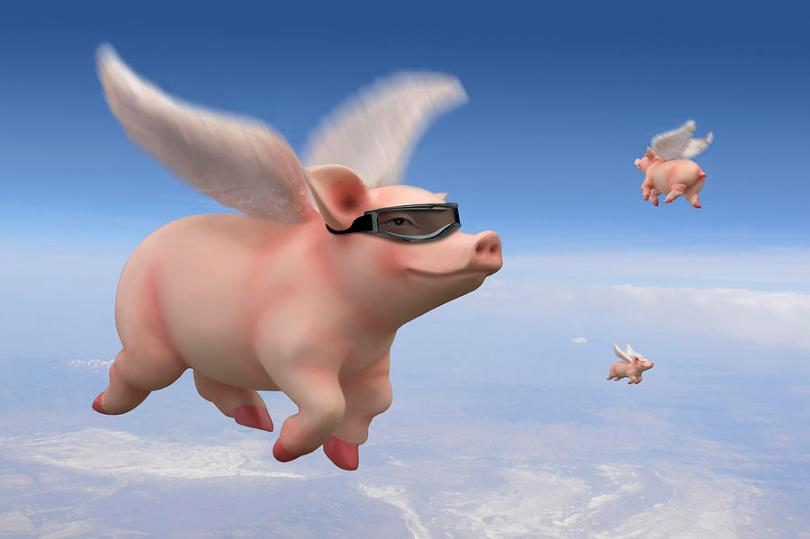flying-pigs